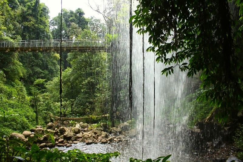 Dorrigo NP – parádní deštný prales