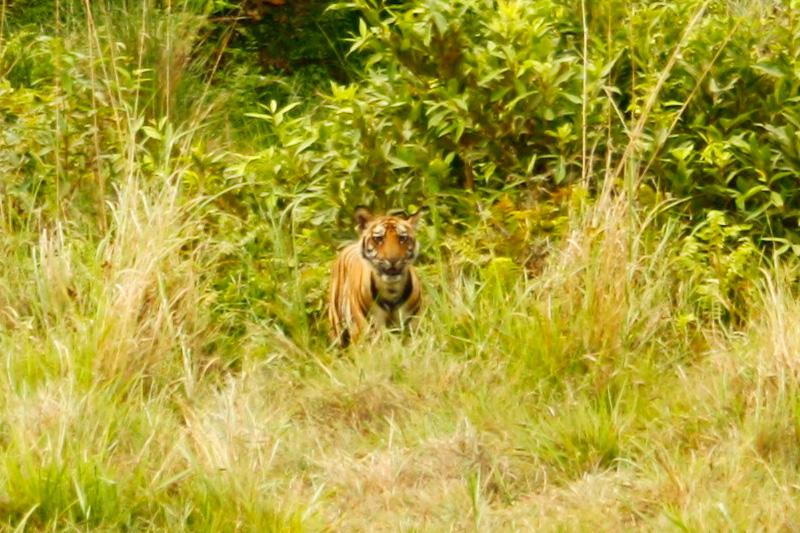Trpělivost růže a někdy dokonce tygry přináší