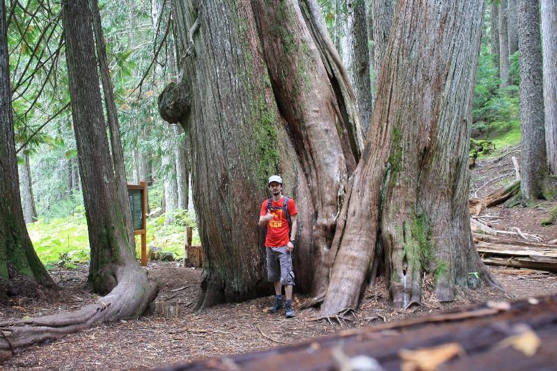 Říjen – Ancient Cedars, Thanksgiving party