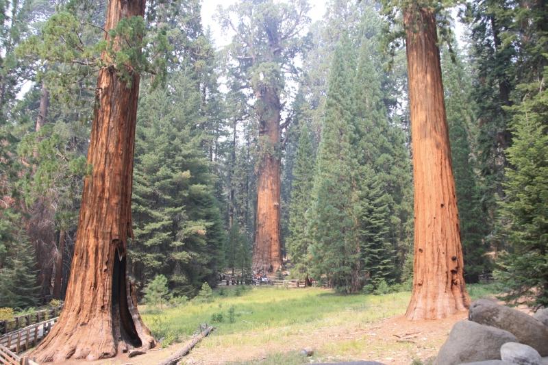 Sequoia NP a dojezd do LA po Route 66